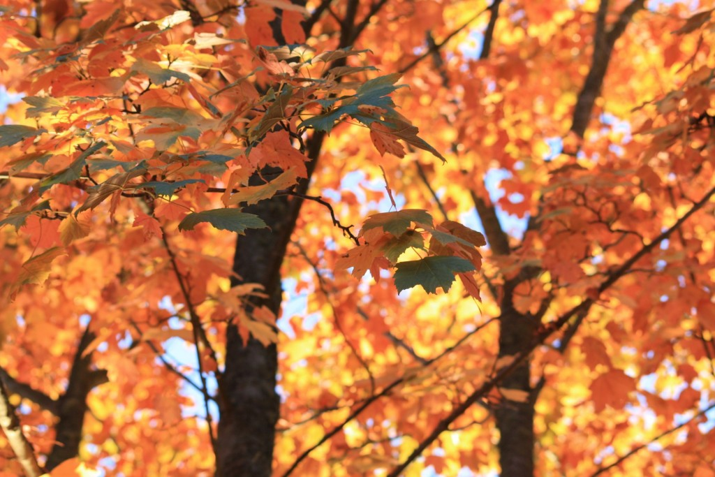 autumn-811488_1920